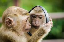 镜像平行宇宙真的存在吗?