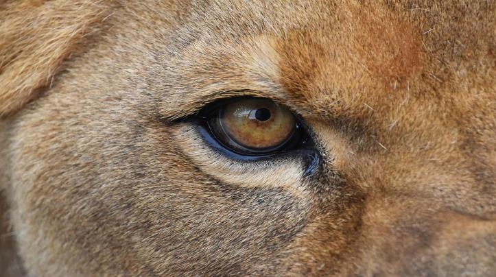 微软发布《野生动物之眸》免费 4K 壁纸包 深入了解野生动物的眼睛