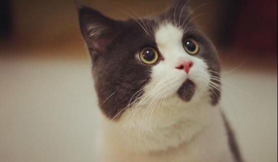 陪伴猫咪健康成长的好味道——卡比猫粮适口性好营养全面均衡
